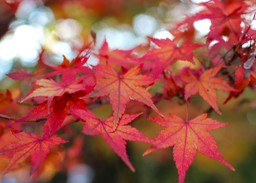 Red-Fall-Foliage
